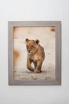 Lionceau 2 - 40 x 50 cm + CADRE