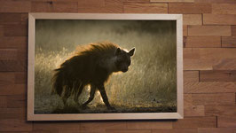 Hyène brune 2 - 40 x 60 cm + CADRE