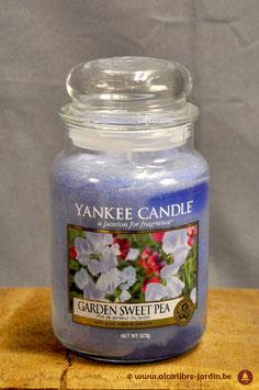 Garden Sweet Pea YK