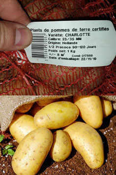 "Pommes de terre - ""Charlotte"""