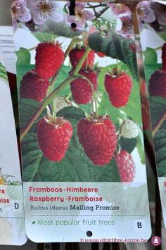 Rubus Idaus Malling Promise