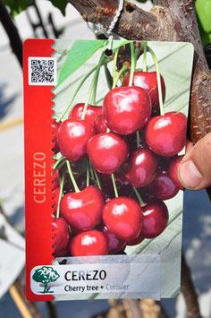 Cerisier - Prunus Avium Rouge