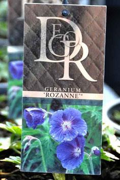 """Geranium """"Rozanne"""""""