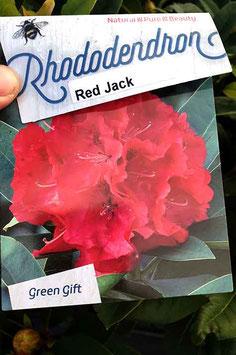 "Rhodo ""Red Jack"""