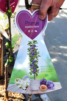 """Prunier - Domestica """"Hanita"""""""