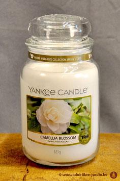 Camelia Blossom YK