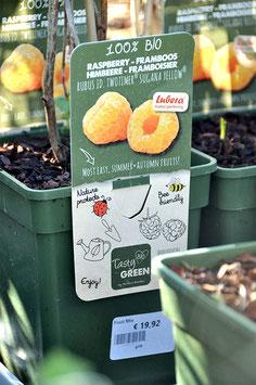 Rubus Idaus twotimer