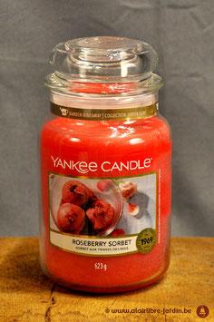 Roseberry Sorbet YK