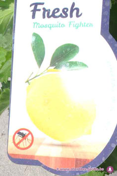 Pelargonium Lemon Fresh