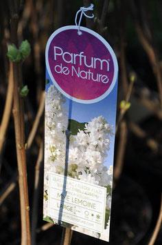 Syringa Me Lemoine Parfum de Nature