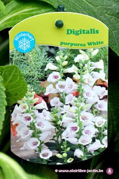 """Digitalis Purpurea """"White"""""""