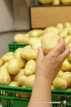"""Pommes de terre - """"BINTJE"""""""
