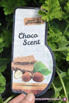 Pelargonium Choco sent