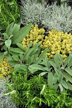 Plantes aromatiques Mix
