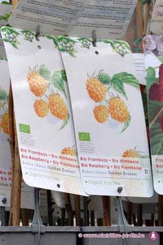 """Rubus """"Golden everest"""" BIO"""
