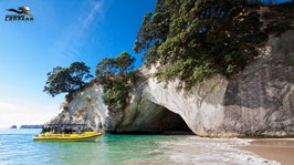 Ocean Leopard Tours - Cathedral Cove