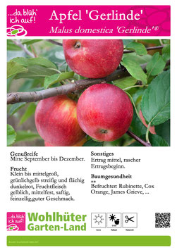 Obstbaum Apfel Gerline