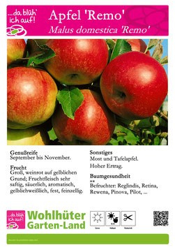 Obstbaum Apfel Remo