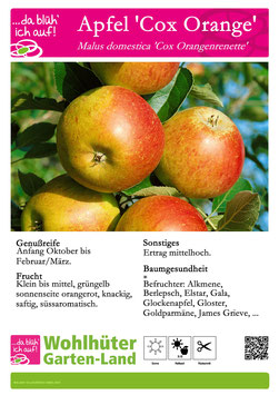 Obstbaum Apfel Cox Orange