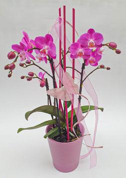 Orchideen verschiedenen Farben mit und ohne Topf wählbar (Nr. OD1)