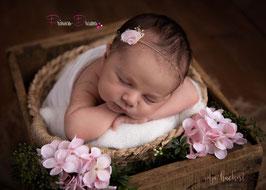 SHB Blume rosa/creme