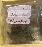Muschio - (bustina Erba Magica)