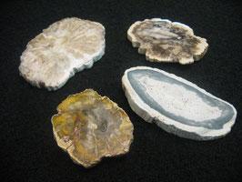 Legno Fossile