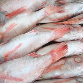 冷凍のどぐろ 中 煮付け・塩焼き用(鱗・内臓処理済み) 原魚約220g~250g×5尾入り 約1.2kg