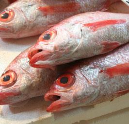 冷凍のどぐろ 特大 煮付け・塩焼き用(鱗・内臓処理済み) 原魚350g~400g×3尾入り 約1.15kg