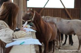"""Coaching mit Pferden: was steckt hinter der """"sechs Augen"""" - Methode?"""