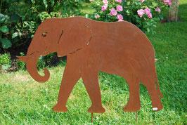 Elefant, Rüssel nach innen gerollt