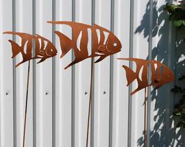 Fisch, gebaucht