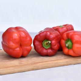 Bio Paprika, rot - 1 Stück