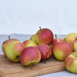 Äpfel - 1 kg (Sorte Elstar) aus dem Alten Land