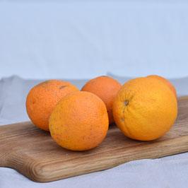 Bio Orangen - 1 kg