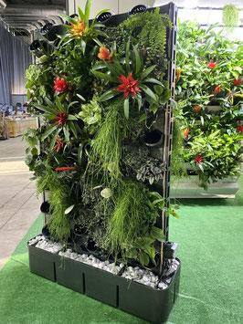 Raumteiler beidseitig bepflanzbar mit 144 Pflanzen, vollautomatische Bewässerung