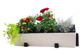 V4 Pflanzmodul für 4 Pflanzen