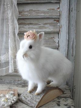 Taxidermy: Zauberhaftes weißes Zwerg Kaninchen