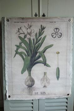 Shabby: Dekorativer Druck auf Leinen Botanical