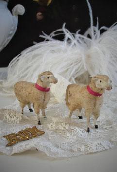 Paar süße alte Wollschafe Erzgebirge