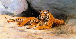 Tigers Resting