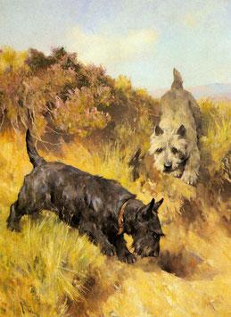 Two Scotties in a Landscape