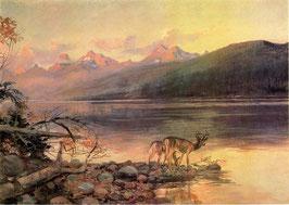 Deer at Lake McDonald