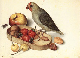 Still Life with Pygmy Parrot, Undated