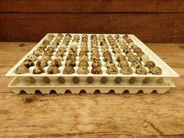 Wachteleier Horde für 100 Eier