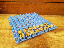 Wachteleierhorde aus Kunststoff für 72 Eier