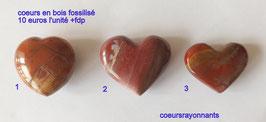 coeur bois fossilisé