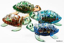 Schildkröte mittel (M)