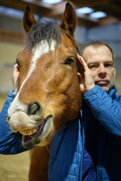 Workshop Grundlagen der Faszienmobilisation am Pferd