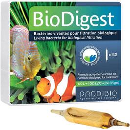 PRODIBIO BioDigest - 12 ampoules